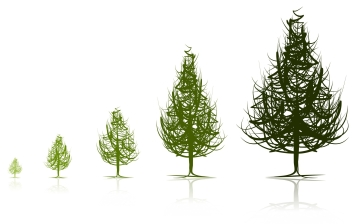 trees-stages-of-growth.jpg
